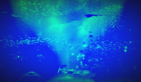 Shark tank - Osaka Kaiiyukan