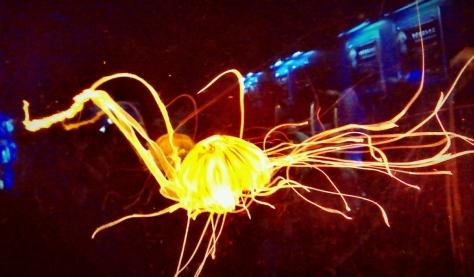 Jellyfish - Osaka Kaiyukan