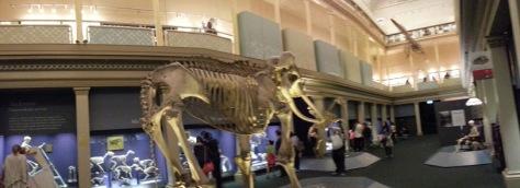 Aussie Museum - bones