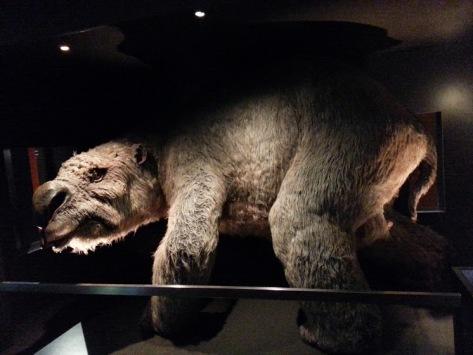 Aussie Museum - guinea