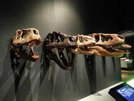 Trex Family - skulls